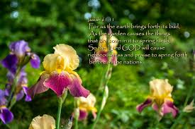 Isaiah 61-11